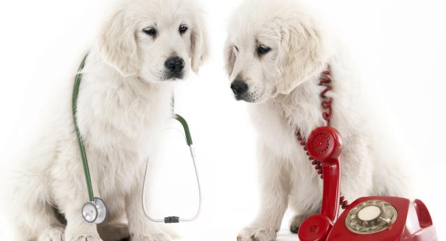 Le buone pratiche veterinarie